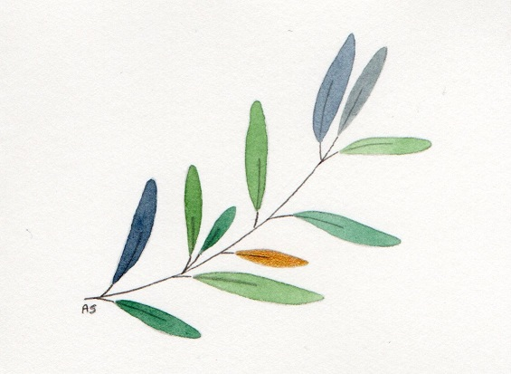 Olive__-2[1]